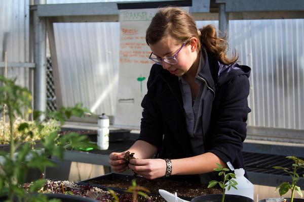 girl transplanting plants